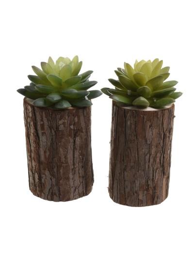 Φυτό Σε 2 Σχέδια INART Κωδικός: 3-85-104-0066