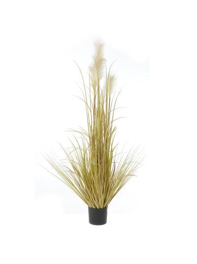 Φυτό Σε Γλάστρα INART Κωδικός: 3-85-783-0023